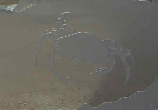 etched glass crab