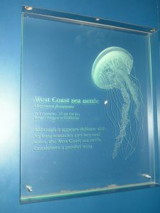 Signs with Carved Glass Beach Coastal aquarium jellyfish by Sans Soucie