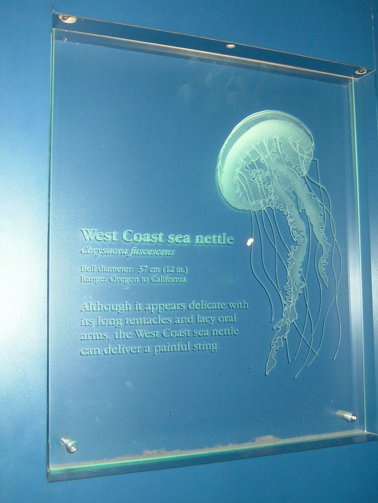 Long Beach Aquarium Glass Signs Sans Soucie