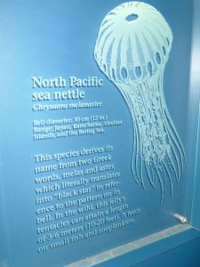 Sans Soucie Signs with Glass Carving Beach Coastal aquarium jellyfish